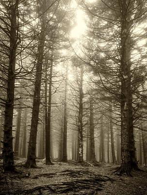 Photograph - Pines-sepia by Joye Ardyn Durham