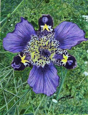 Fuqua - Artwork Drawing - Pinewoods Lily by Beverly Fuqua