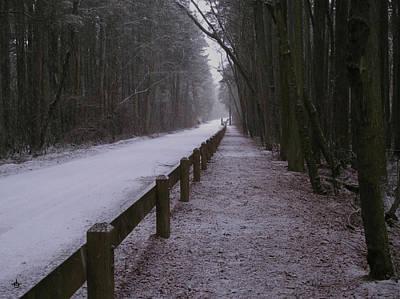 New Jersey Pine Barrens Digital Art - Piney Road by Dominic Yannarella