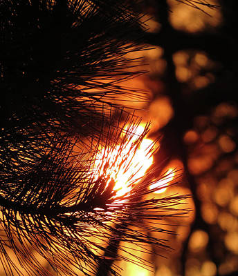 Photograph - Piney Sunset by Laurel Powell
