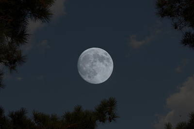 Photograph - Piney Woods Moon by Betty Northcutt