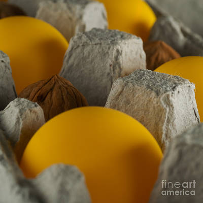 Ping Pong Wall Art - Photograph - Ping Pong Nuts by Rolf Bertram