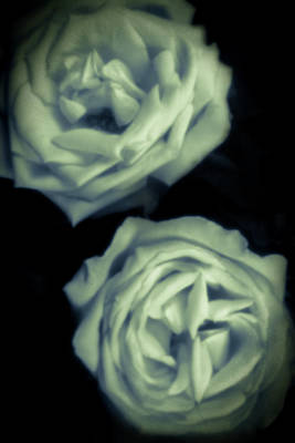 Photograph - Pinhole Rose 3004 by Rudy Umans