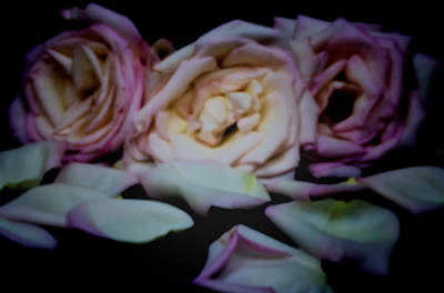 Photograph - Pinhole Rose 3006 Color by Rudy Umans
