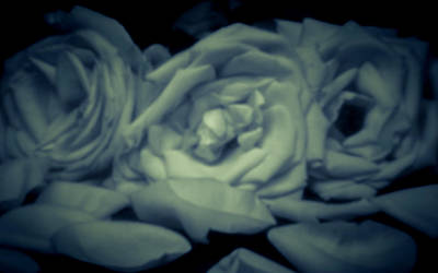 Photograph - Pinhole Rose 3006 by Rudy Umans
