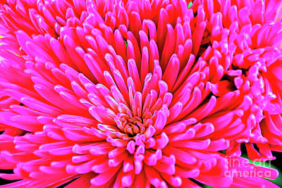Photograph - Pink 137 by Ray Shrewsberry
