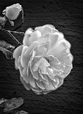 Photograph - Pink A8 Bw by Leif Sohlman
