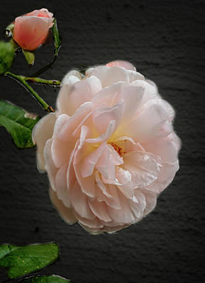 Photograph - Pink A8 by Leif Sohlman
