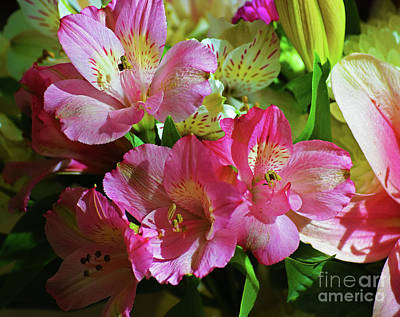 Photograph - Pink Alstroemeria by Patti Whitten