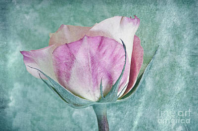 Photograph - Pink And Aqua Rose Profile by Jim And Emily Bush