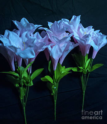 Photograph - Pink And Blue Flowers On Black by Scott Hervieux