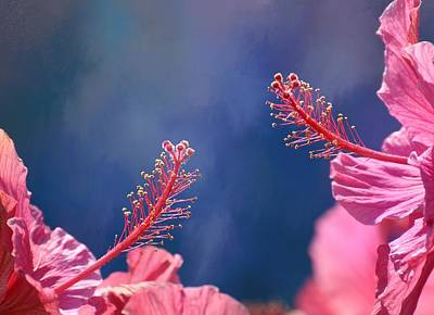 Photograph - Pink And Blue by Fraida Gutovich