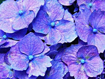 Photograph - Pink And Blue Hydrangea 4 by Sarah Loft