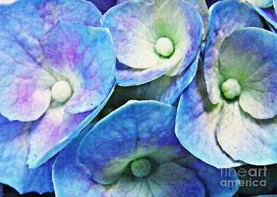 Photograph - Pink And Blue Hydrangea 5 by Sarah Loft
