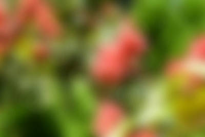 Pink And Green Blur Background Art Print