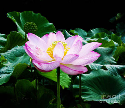 Pink And Green Floral Garden Ballet 11u Lotus Bloom Art Print