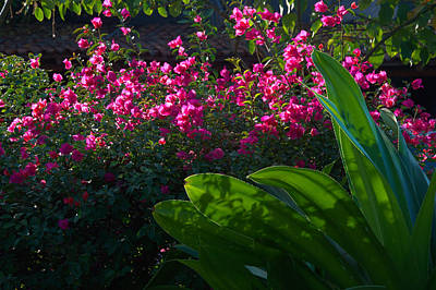 Pink And Green Art Print by Jim Walls PhotoArtist
