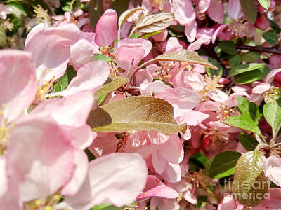Photograph - Pink And Green by Robert Knight