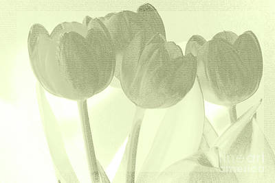 Photograph - Pink And Grey Tulips by Karen Lewis