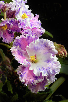 Photograph - Pink And Purple African Violets by Phyllis Denton