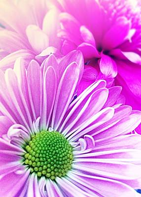 Photograph - Pink  And Purple Daisy And Mum by Ellen Levinson