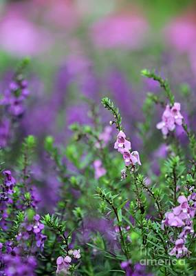 Florida Florals Photograph - Pink And Purple Flowers by Sabrina L Ryan