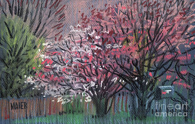 Drawing - Pink And White Dogwoods by Donald Maier