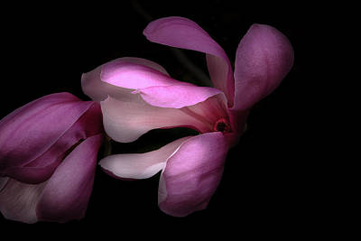Photograph - Pink And White Magnolia In Silhouette by Joni Eskridge