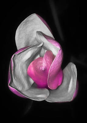 Photograph - Pink And White by Nathan Little