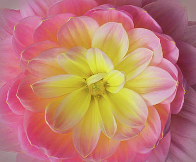 Photograph - Pink And Yellow Dahlia by Mary Jo Allen