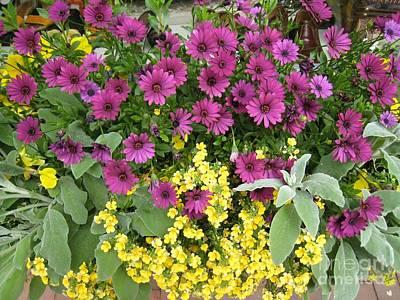 Photograph - Pink And Yellow Flowers by Glenda Zuckerman