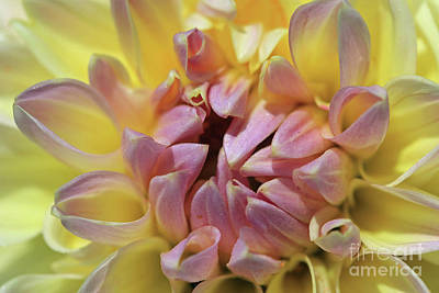 Photograph - Pink And Yellow by Mary Haber