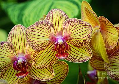 Photograph - Pink And Yellow Orchids by Sharon Woerner