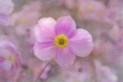 Thimbleweed Photograph - Pink Anemone by Lena Photo Art