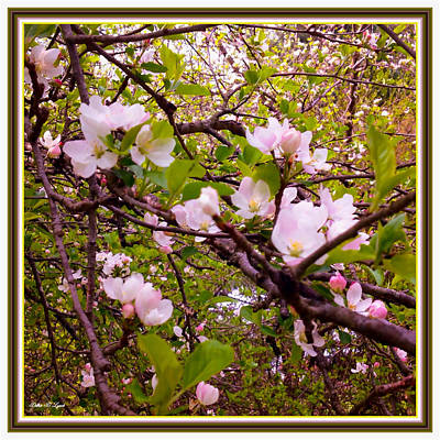 Tree Blossoms Mixed Media - Pink Aplle Blossoms Of Spring Time by Debra Lynch