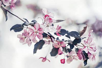 Garden Flowers Photograph - Pink Apple Flowers by Oksana Ariskina