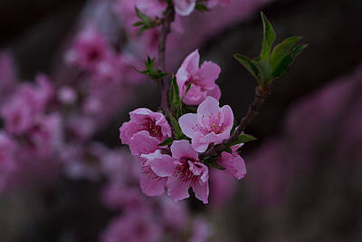 Spring Photograph - Pink by April Bielefeldt
