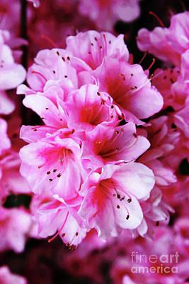 Photograph - Pink Azalea by Larry Oskin