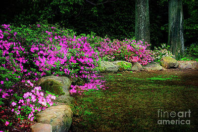 Photograph - Pink Azaleas At The Azalea Festival by Tamyra Ayles