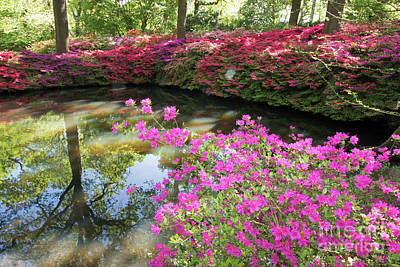 Photograph - Pink Azaleas At The Still Pond by Julia Gavin