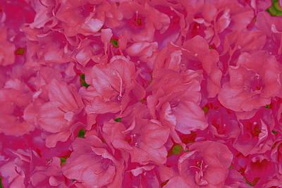 Photograph - Pink Azaleas Pop Art by Dora Sofia Caputo Photographic Art and Design