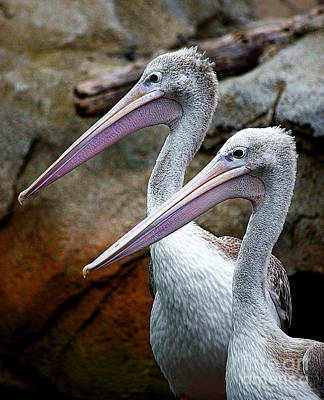 Photograph - Pink-backed Pelican Pair Profile by Patti Whitten