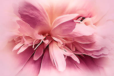 Photograph - Pink Ballet Powder Puff by Darlene Kwiatkowski