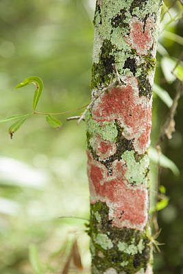 Photograph - Christmas Lichen by Marilyn Hunt