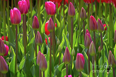 Photograph - Pink Beauties by Idaho Scenic Images Linda Lantzy