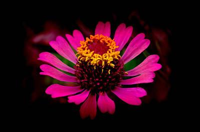 Zen - Pink beauty by Bliss Of Art