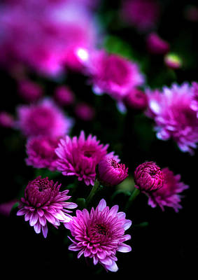 Photograph - Pink Beauty by Cherie Duran