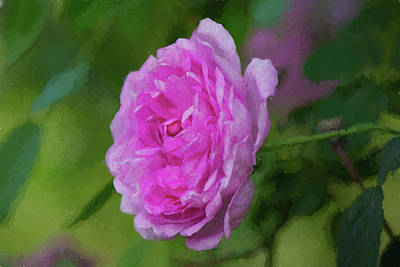 Photograph - Pink Beauty In Bloom by Patricia Montgomery