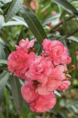 Photograph - Pink Beauty by Tina Ernspiker