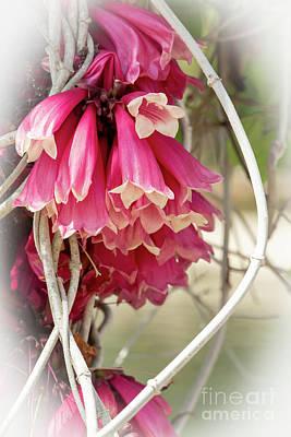 Photograph - Pink Bells by Sabrina L Ryan